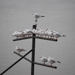 Gulls Waiting