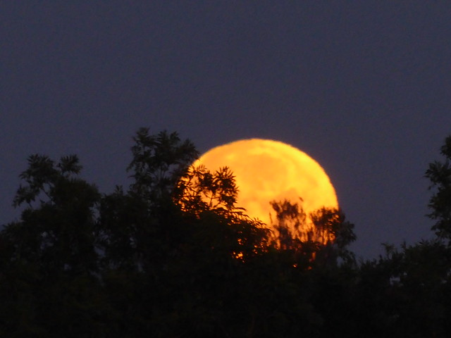 P1190389 Monduntergang