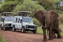 Tanzania Wildlife Safari August 2022