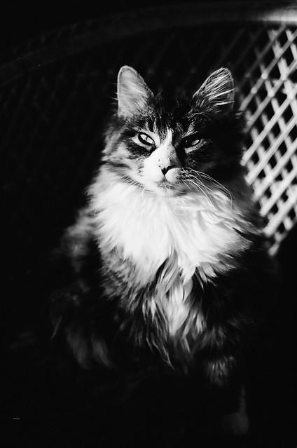Ripley in the sunlight.