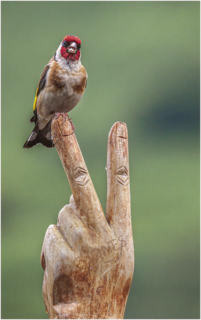 I'm not on a stick :-) © C JONES
