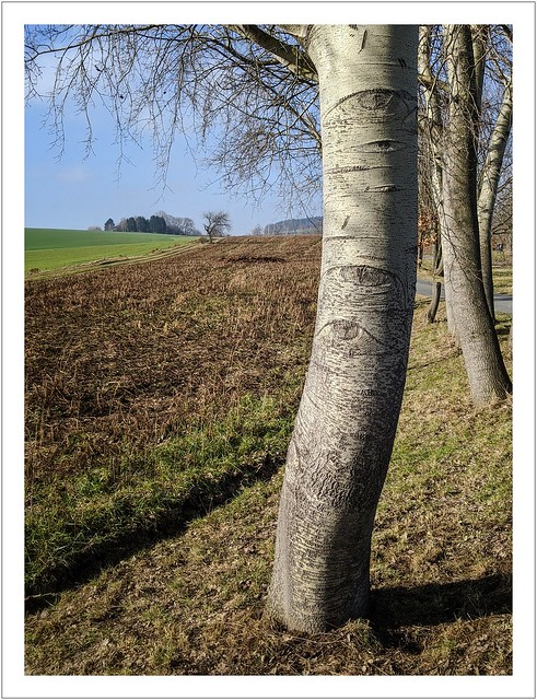 Der Frühling kommt...und die Bäume machen die Augen auf...