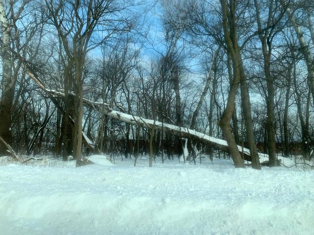 Winter Scene, Linne Woods, Morton Grove, Illinois, February 17, 2021 7 full
