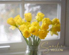 u201cYu201d is for Yellow and Yay for the coming of spring!