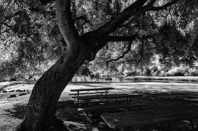 Benched At Santee Lakes - Infrared