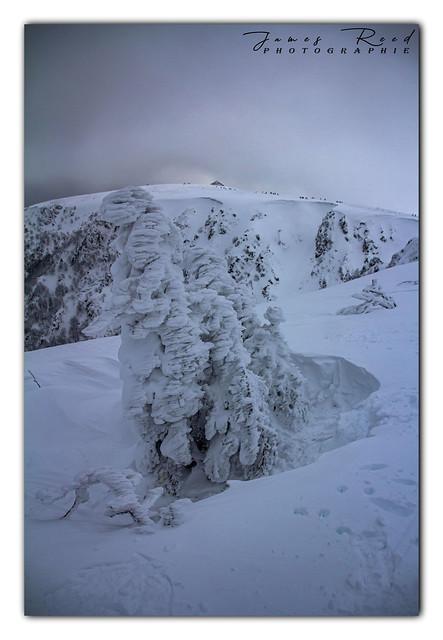 L'hiver et son offensive au Hohneck - Haut Rhin / Vosges