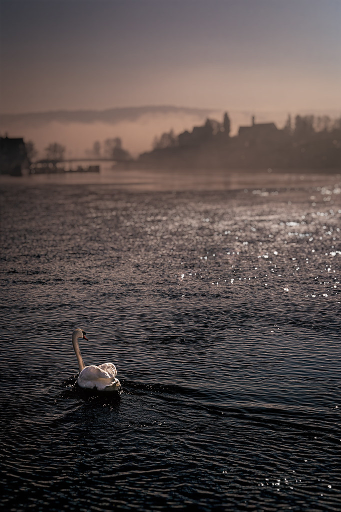 SWAN LAKE - Switzerland