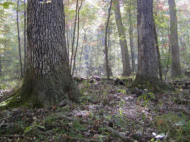 Maryland Forest