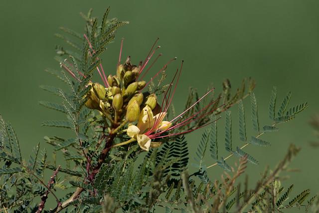 Flora nativa argentina