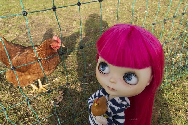 153/365 We love chickens