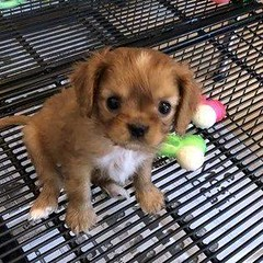 Pets of MSVU: Fauci