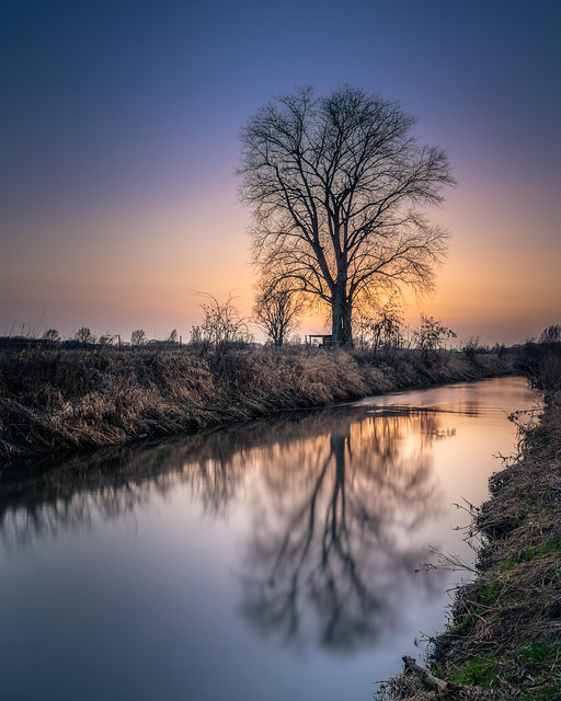 A sunset, a river and a tree.....