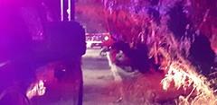 #roja Muere una persona en supuesto accidente automovilu00edstico en la calle San Agustu00edn en la colonia Los u00c1ngeles municipio de Corregidora.