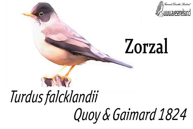 Zorzal-reloaed