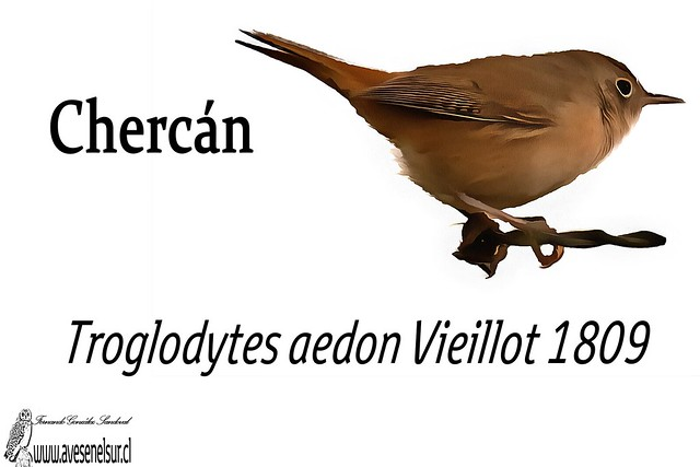 chercan-reloaed