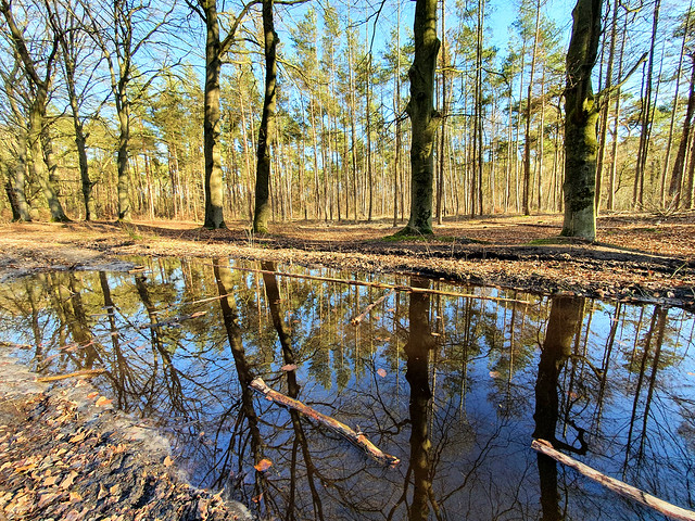 Reflection in the forest, Lage Vuursche, the Netherlands
