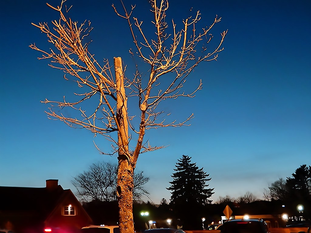 The Golden Tree At Dusk - Photo by STEVEN CHATEAUNEUF - Taken On