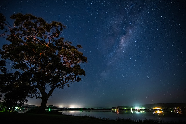 Gum tree, stars, and the Milky Way at the waterfront