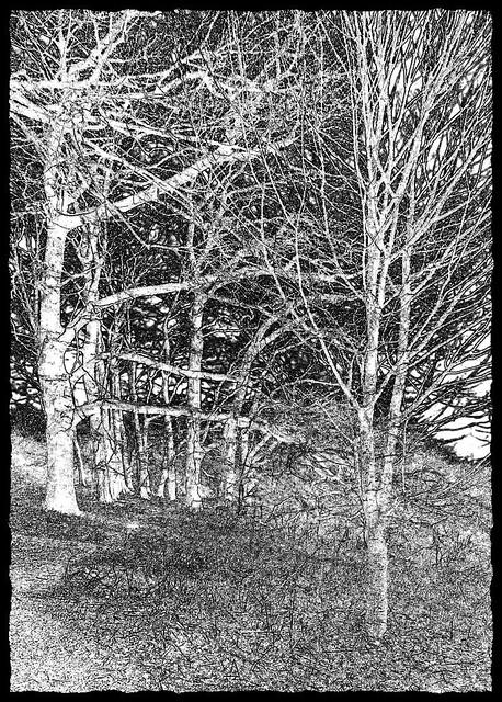 Footpath through the trees, Ashridge, Buckinghamshire.