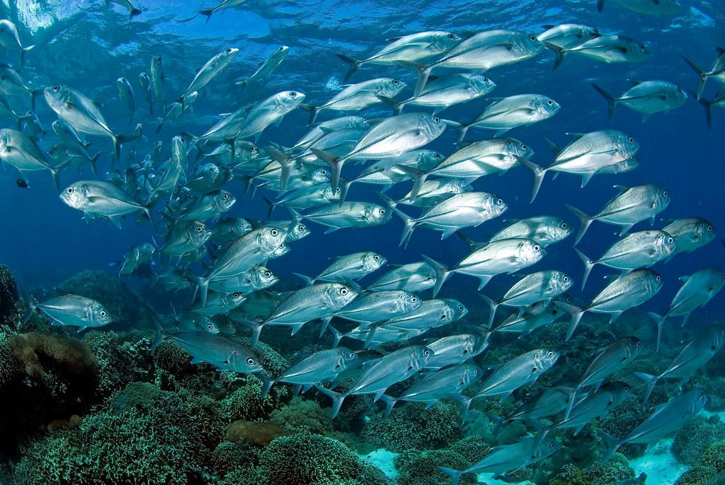 海保區將帶動周邊水域漁獲量的上升、提供轉型高收益的海洋觀光產業的機會,更將減緩氣候危機造成的影響,圖為菲律賓阿波島。照片提供:綠色和平