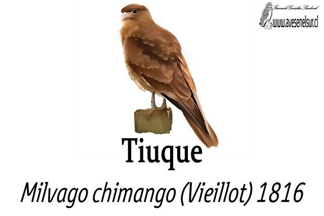 Tiuque-reloaed
