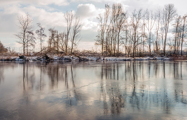 Bare trees reflected on the water and ice surface