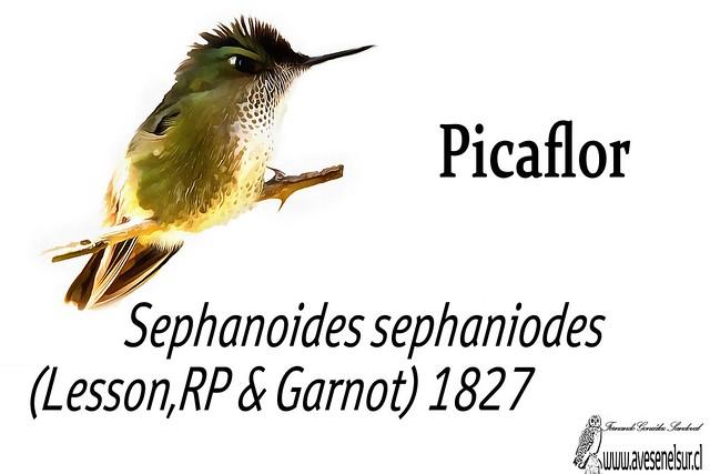 Picaflor-reloaed
