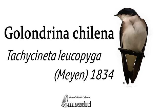 golondrina chilena-reloaed