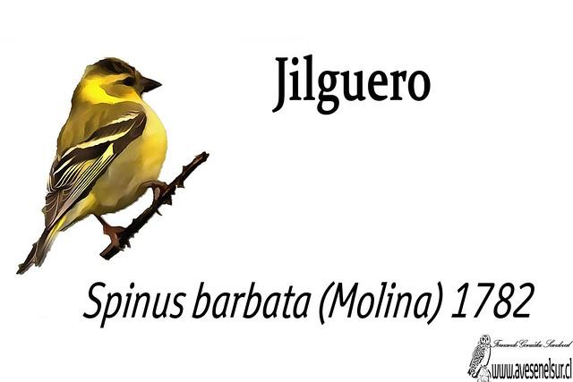 Jilguero-reloaed
