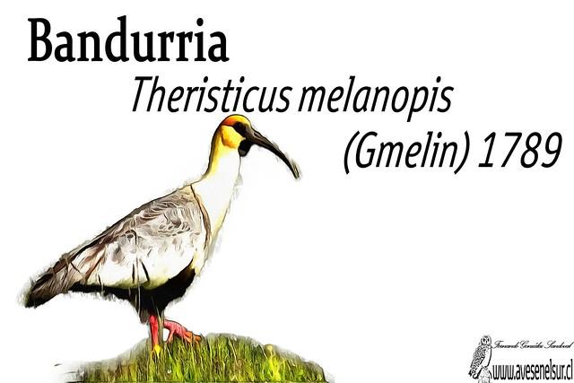 Bandurria-reloaed