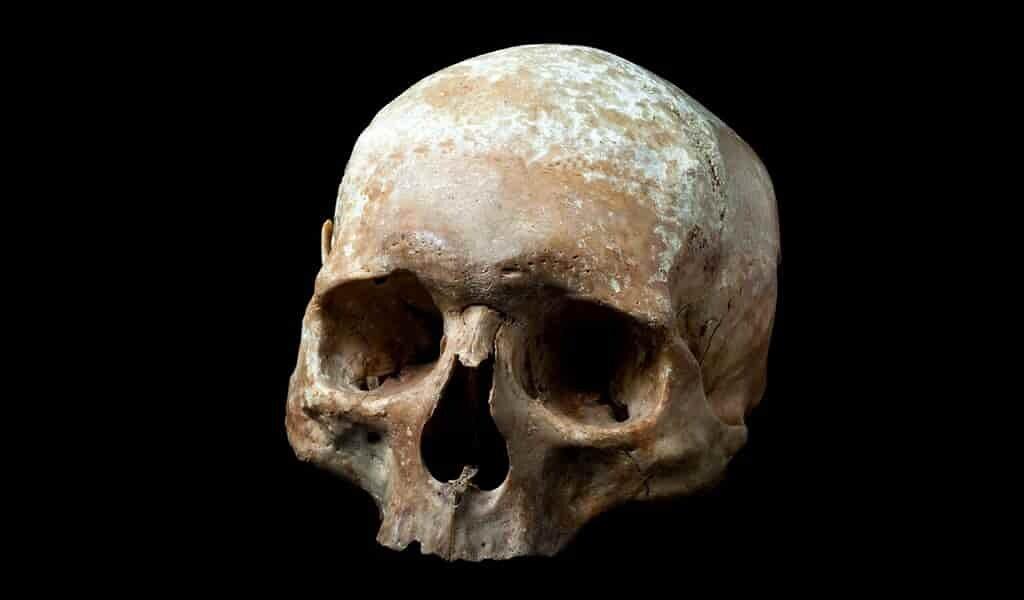Les premiers humains se balançaient comme des singes