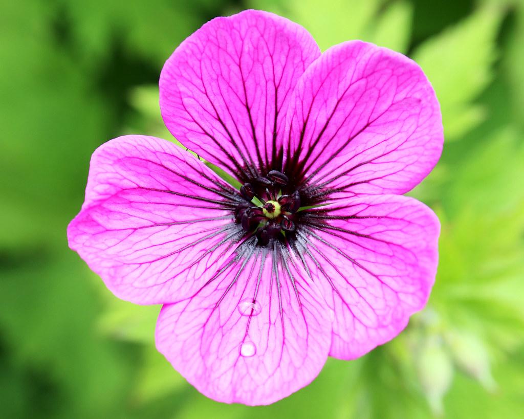 Larnach Castle Garden Flower 1