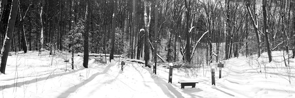 028504BW- The Southern Trail To The Left... The Livingston Trail, Straight Ahead