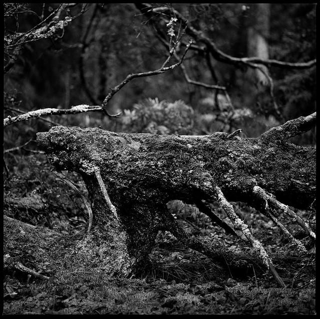 Forgotten photograph from last autumn