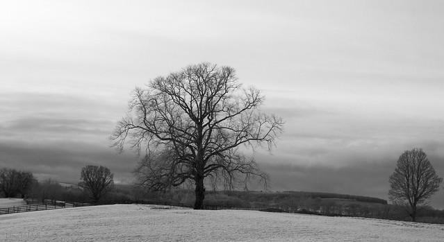 The winter tree in B+W ....