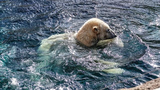 9453 - Bear