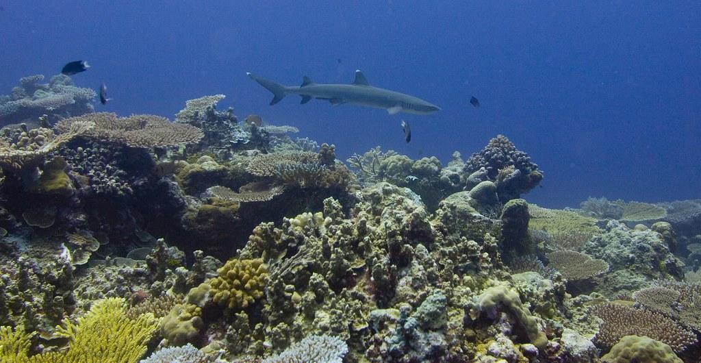 海保區能達成復育海洋生態與漁業資源永續利用的雙贏,圖為帛琉海保區。照片提供:綠色和平