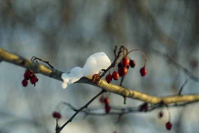 Снежок / Snowball (2)