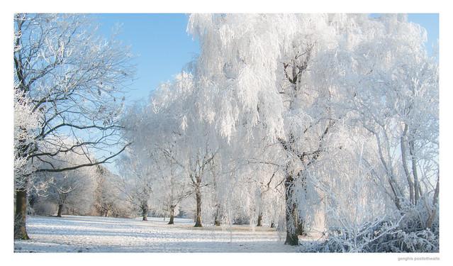 Hoar frost in 2010