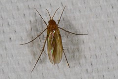Unidentified Insect