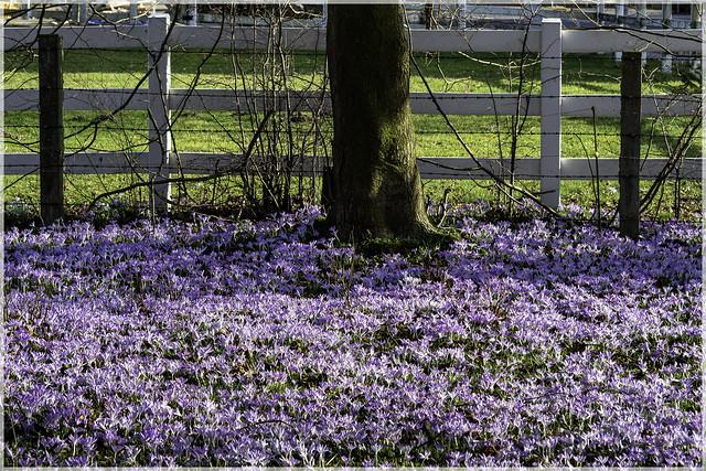 Romantische Frühlingswiese