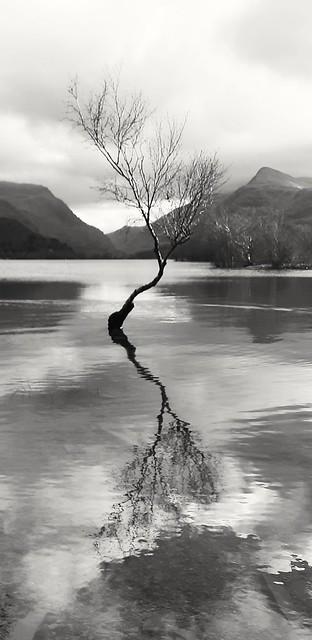 Lone tree reflection