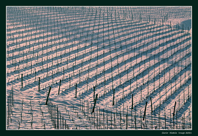 Winter sunset over the vineyards