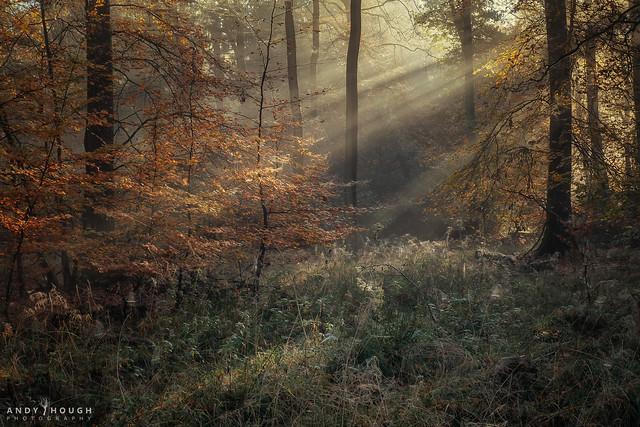 In a delicate autumn light
