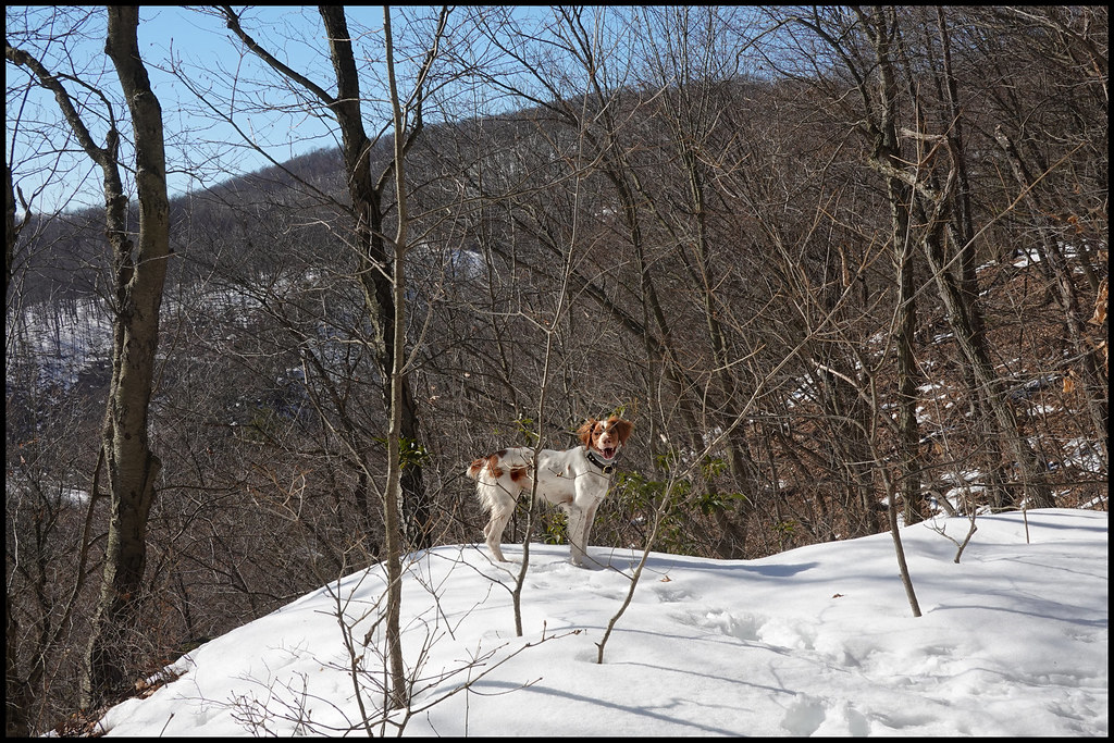 2-24-21 - Bliss on the mountain