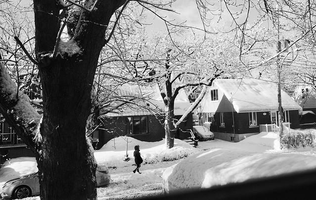 La surprise au matin : les branches avaient garder leurs boules de neige...