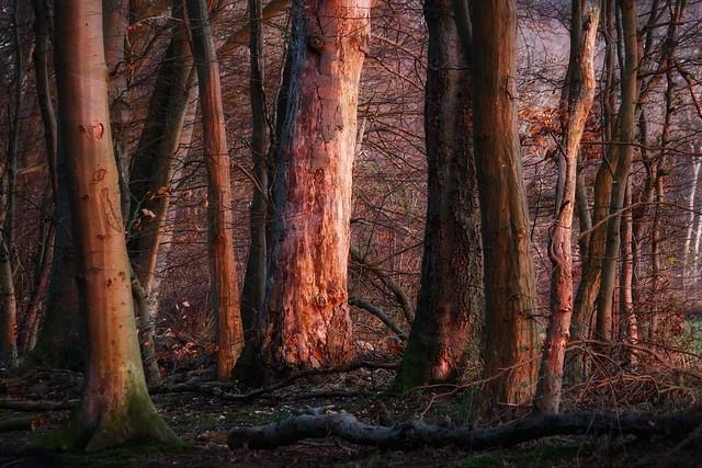 Waldrand in der Abendsonne
