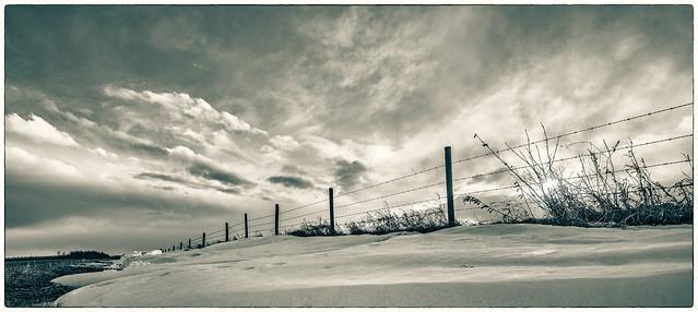 the last snow standing