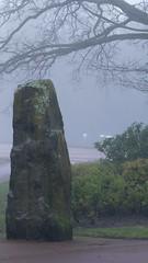 West Park, misty winter morning, erratic