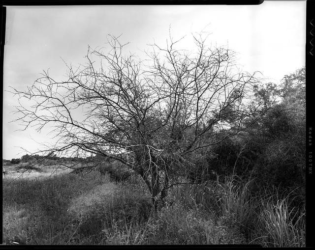 pinhole arbusto